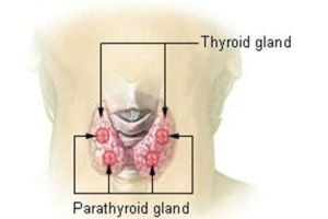 thyroid2_s640x427